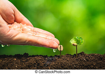 coffee seedling in nature plant a tree concept,Young hand
