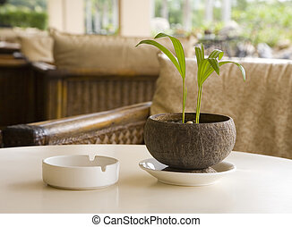 ash-tray - Coffee table with ash-tray and plant