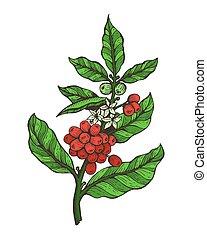 Coffee Tree Colorful Plant Vector Illustration - Coffee tree...