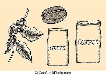 Coffee tree illustration. - Branch with leaves and grains of...