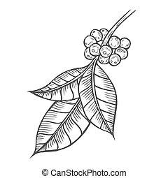 Coffee tree illustration. - Coffee tree branch illustration....
