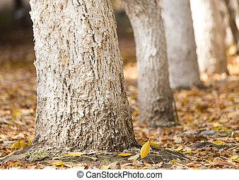 coffre, arbre, nature
