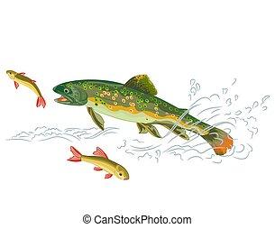 coger, trucha, depredador, pez, arroyo