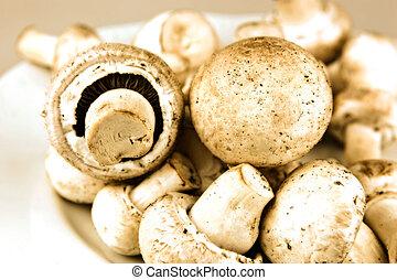 cogumelo comestível