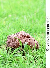 cogumelo, dired, ligado, um, capim