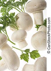 cogumelos, botão branco, (champignon)