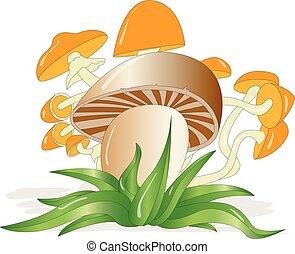 cogumelos, branca, jogo, isolado, ilustração