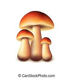 cogumelos, branca, vetorial, isolado, floresta
