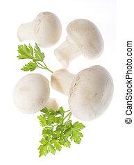 cogumelos, champignon