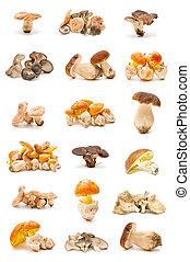 cogumelos, comestível