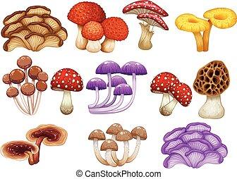 cogumelos, diferente, jogo