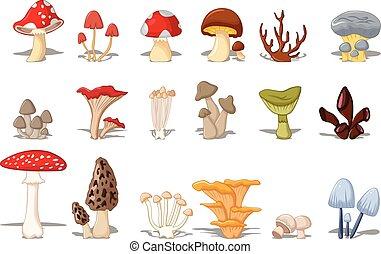 cogumelos, diferente, tipos