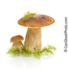 cogumelos, fundo branco, musgo