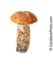 cogumelos, isolado