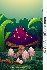 cogumelos, pequeno, gigante, cercado, cogumelo