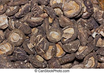 cogumelos,  Shiitake