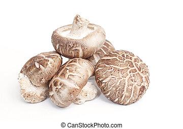 cogumelos, shiitake, isolado