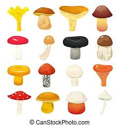 cogumelos, vetorial, ilustração