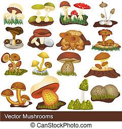 cogumelos, vetorial