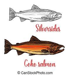 coho, salmón, pez, bosquejo, de, animal marino, diseño