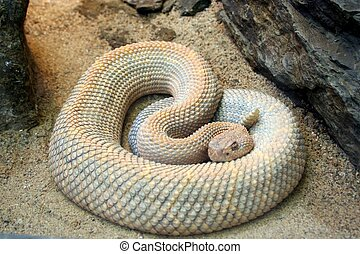 A snake all coiled up