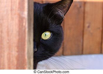 coin, derrière, regarder dérobée, chat