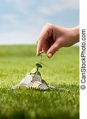 Coins on grass - Plant growing in coins on green grass with...