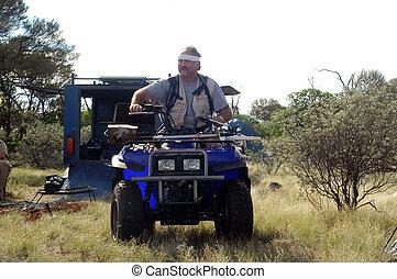cojinete, arbusto, australiano, oro, prospection