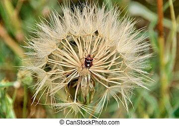 coléoptère fleur
