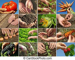 colagem, agricultura