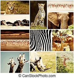 colagem, animais, safari, africano