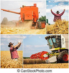 colagem, -, colheita, trigo