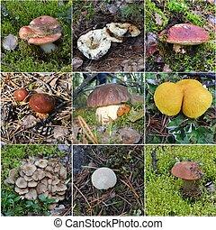 colagem, comestível, fungos