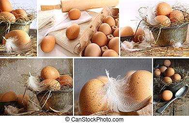 colagem, de, marrom, ovos, imagens