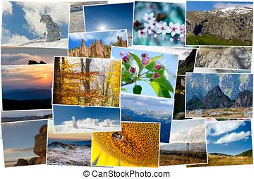 colagem, de, natureza, fotografias