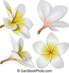 colar, flores, havaiano