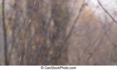 Cold autumn day with snowfall - Snow falling on the...