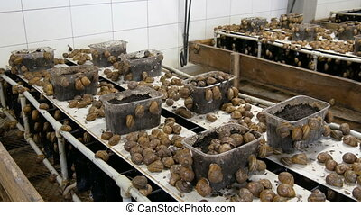 Cold chamber for the number of snails on a snail farm, a ...