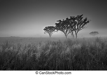 Cold cloudless morning sunrise with trees, grass and fog in arti