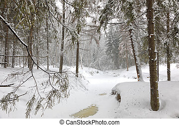 Cold day in snowy winter forest