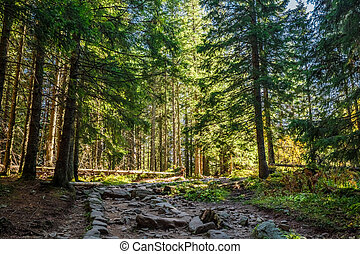 Cold forest in Tatra mountains at sunrise in autumn