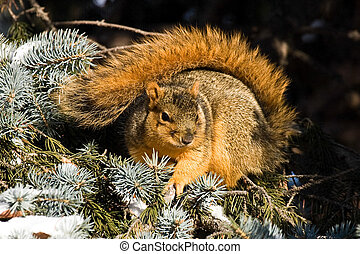 Cold Fox Squirrel Sitting In The Sun For Warmth