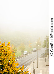 Cold misty morning II