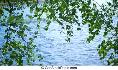 Cold mountain river runs along the trees. On the banks of the river grow birch, coniferous trees. Beautiful scenery