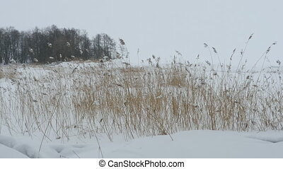 cold snowy winter - snow cold winter snow drifts snowfall...