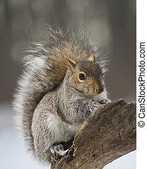 Cold tree squirrel