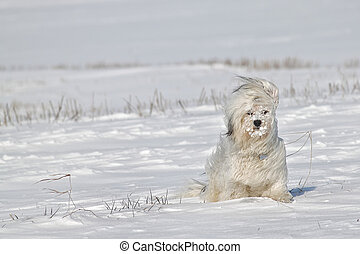 A dog sitting in snow with snow lumps in the coat, thereby blowing a cold wind.