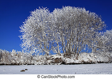 A tree in snow against the blue sky