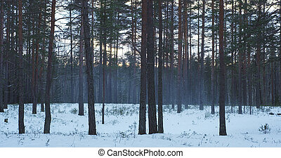 cold winter evening in pine forest with smoke