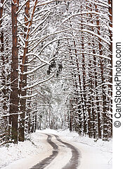 Cold winter landscape. Empty curving road in winter forest